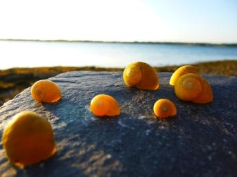 Empty Shells #3