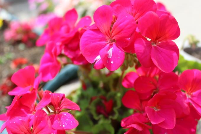 Generic Flower Photograph