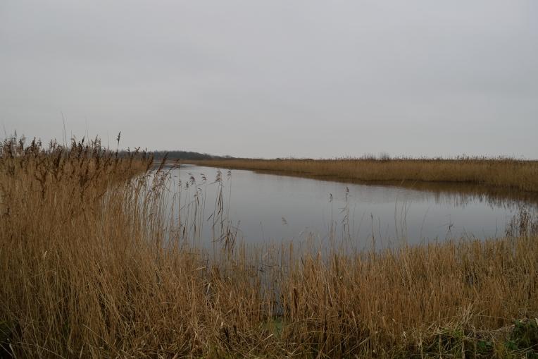 Newport Wetlands #2